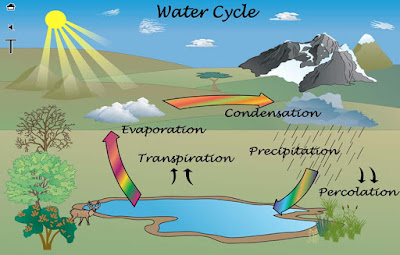 Tahap Siklus Daur Air : Tahapan, Proses, dan Gambar Ilustrasi