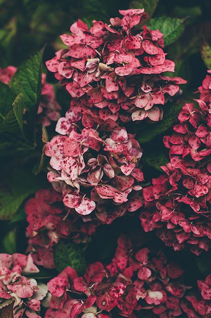 خلفيات ورود جميلة جدا صورة وردة جميلة 16