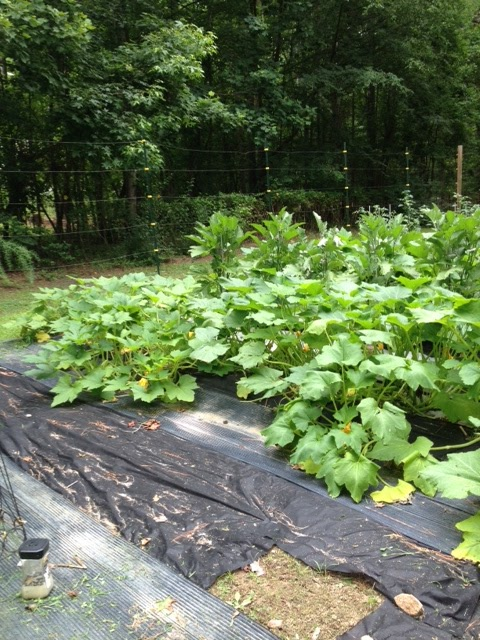 how to kill grass and weeds in a vegetable garden