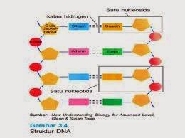 nukleotida dan nukleosida