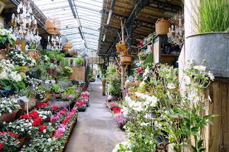 Paris : Marché aux fleurs Reine Elizabeth II, halte bucolique hors du temps sur l'île de la Cité - IVème