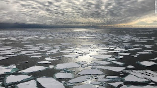 arctic-in-danger