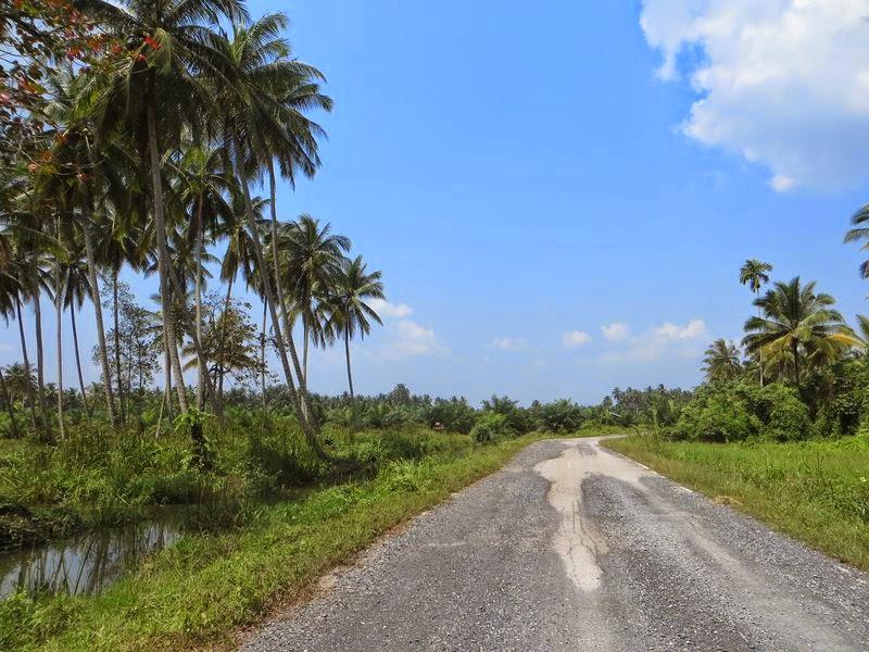 Дорога посередине джунглей