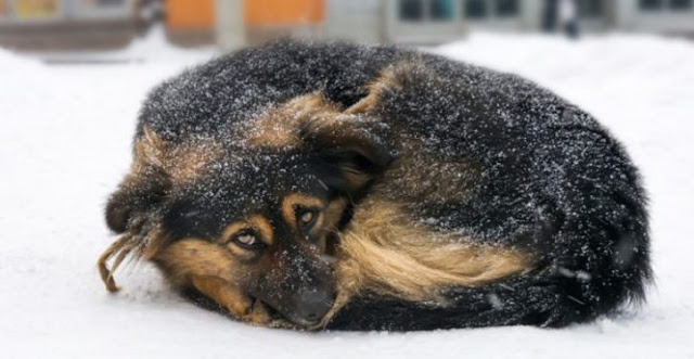 Law forbids leaving animals outside in cold weather