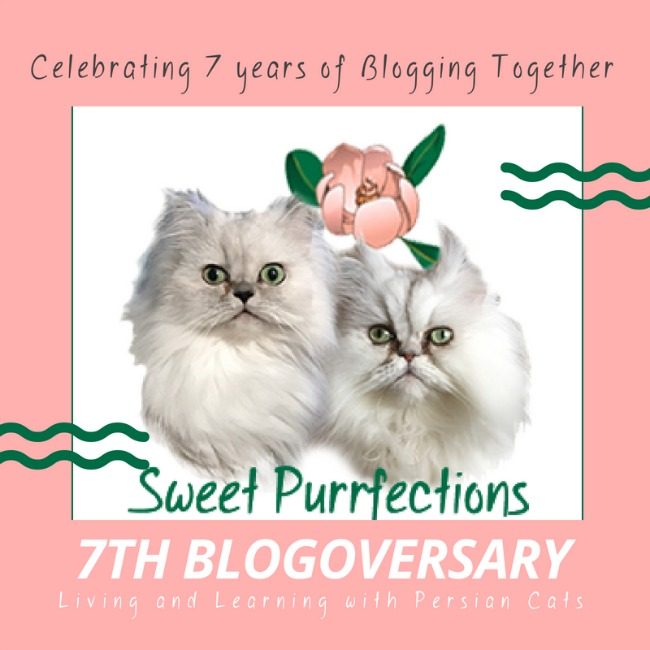 Sweet Purrfections 7th Blogoversary Graphic