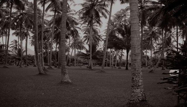 Dikira Anak Kecil, Jongkok dengan Mata Melotot sambil Memeluk Pohon Kelapa