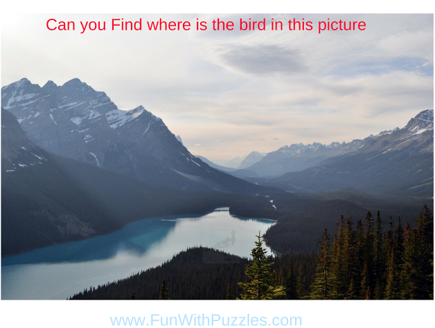 Picture Puzzle to Find Hidden Bird
