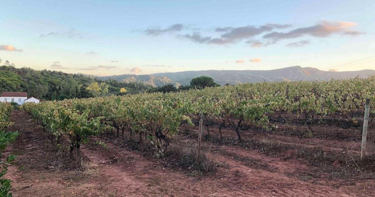 Wine Chronicles | Music & Wine at Quinta de Alcube (Azeitão - Portugal)