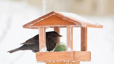 Madárbarát foglalkozás a Pepikertben: készítsen Ön is madáretetőt!