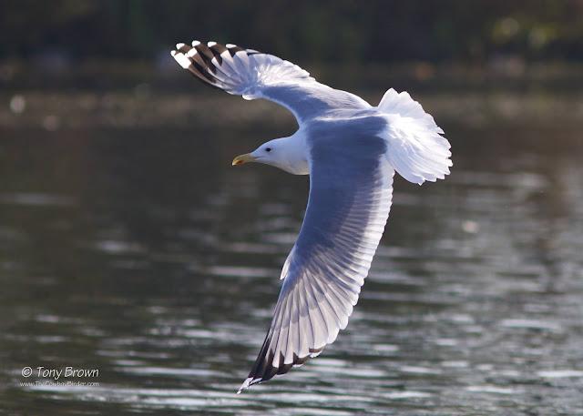 Eagle Pond, Snaresbrook