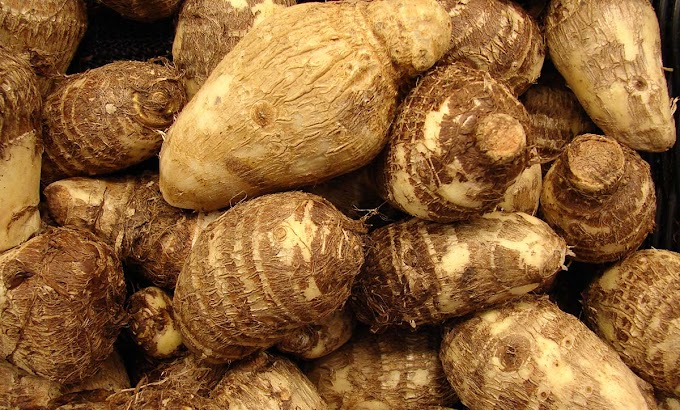 Woman Held for stealing N400 Cocoyam Released From Prison
