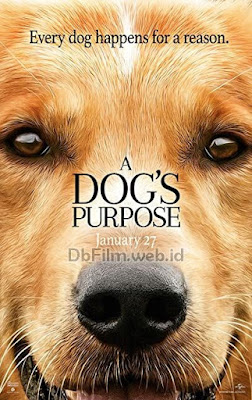 Sinopsis film A Dog's Purpose (2017)