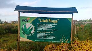 AKA - Agrowisata Kebun Alquran Kaliploso Banyuwangi