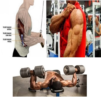 Complete Chest And Triceps Workout