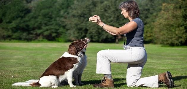 Training your dog to sit as you