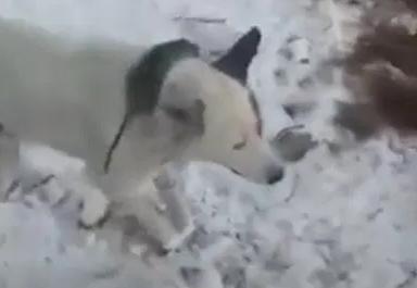 Cazaquistão que animais estão morrendo congelados