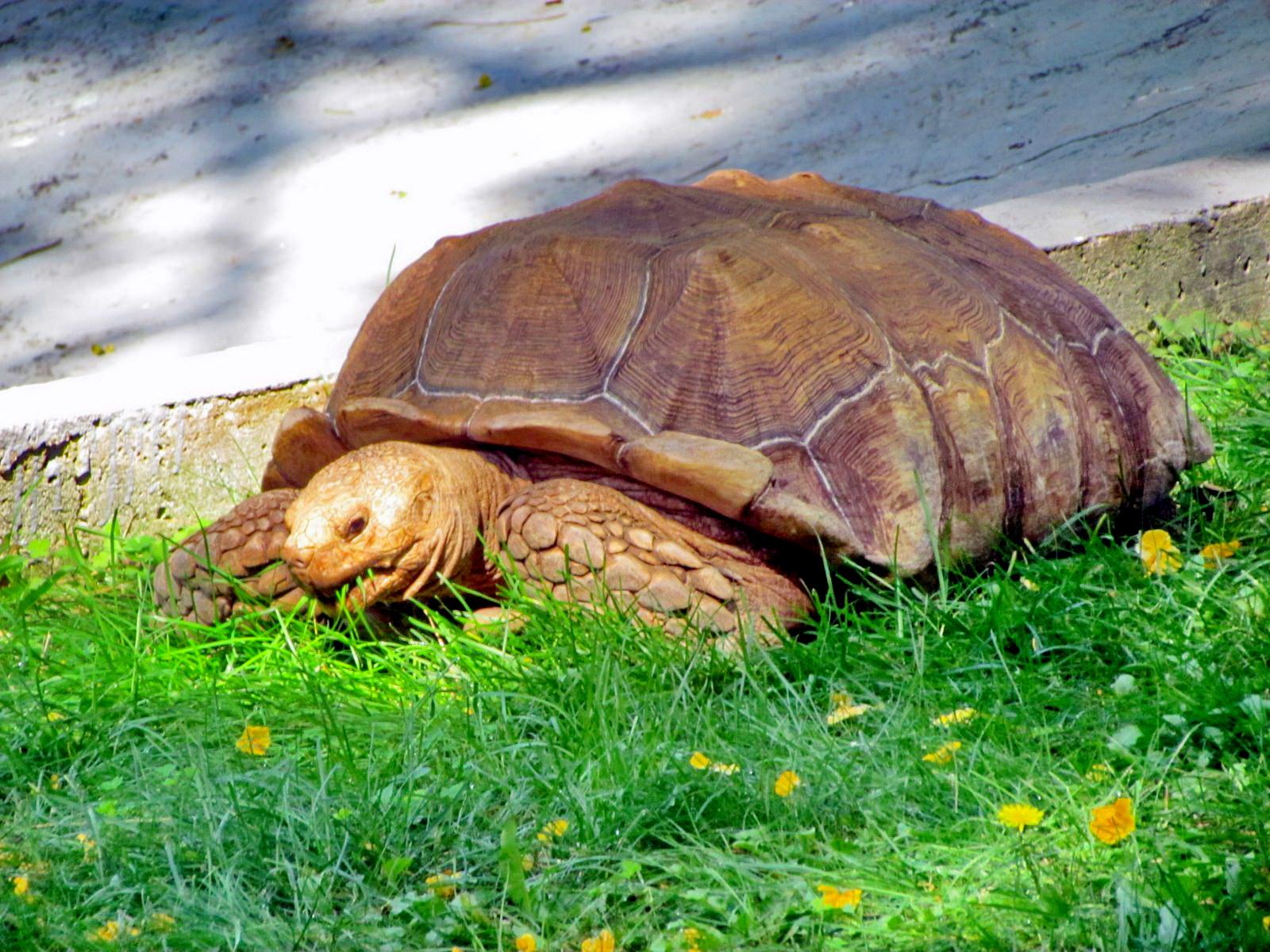 turtle in Botanic Garden
