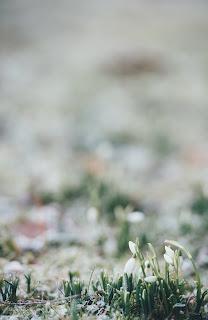 frost covered grass photo by Annie Spratt on Unsplash