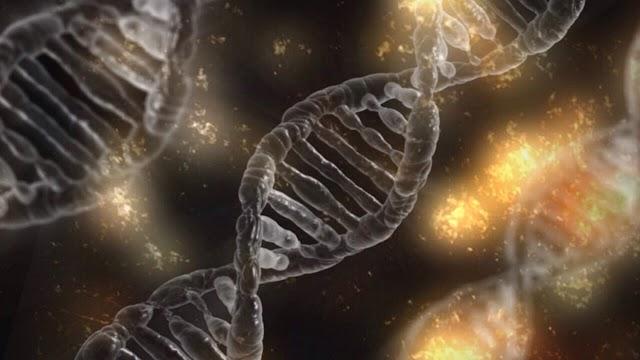 A DUALIDADE NO DNA