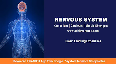 Quick Facts on Human Anatomy: Nervous System