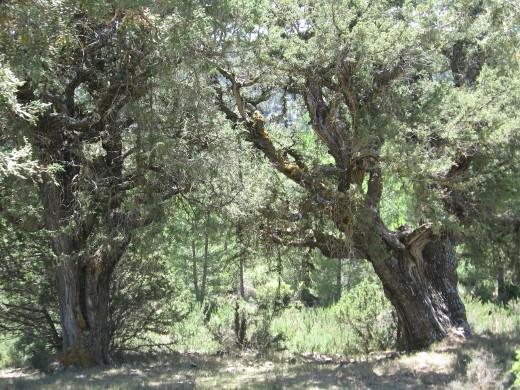 El Consell adjudica la restauración de siete espacios naturales protegidos por 1,4 millones de euros