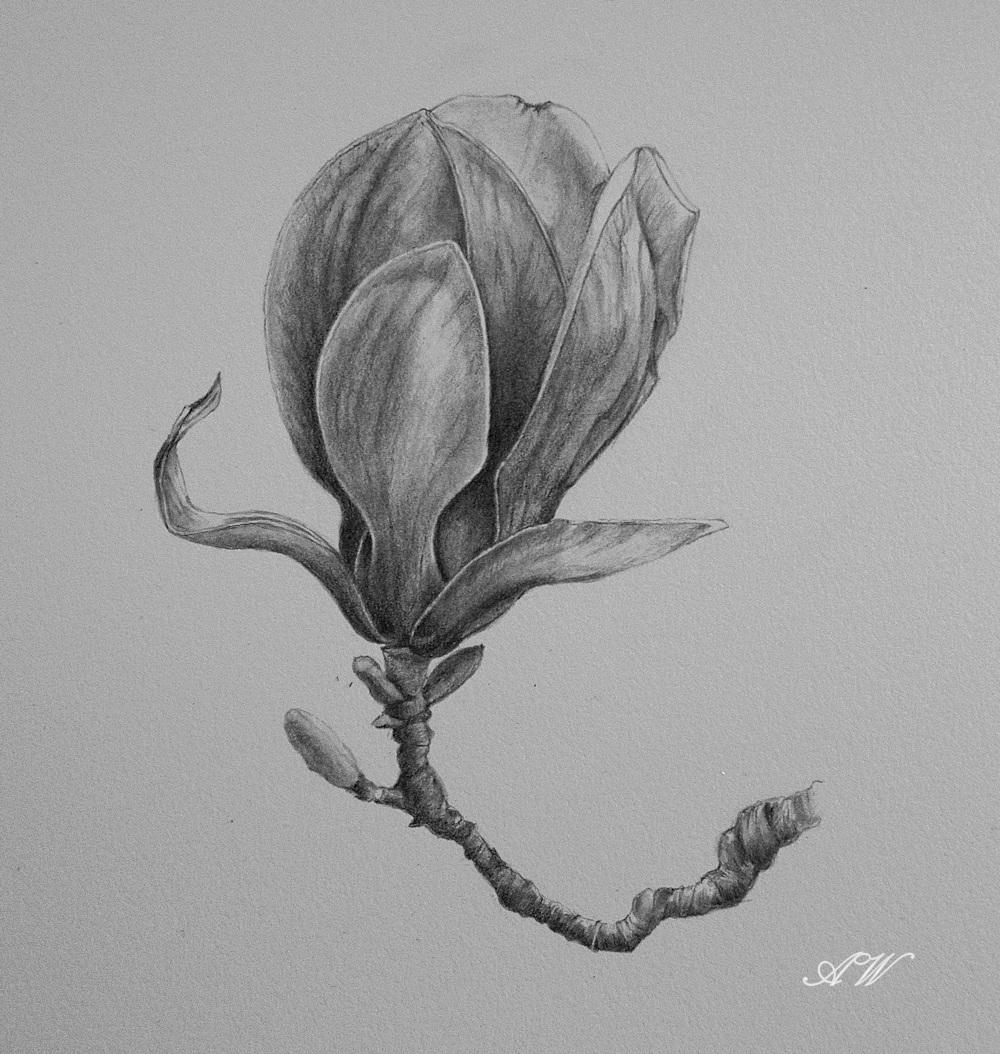 Bedwelming Cursussen Botanisch Tekenen voor Beginners #FV68