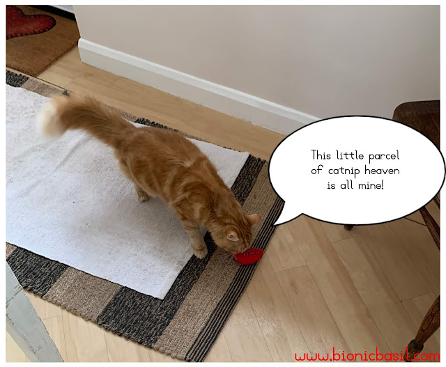 What's In The Box ©BionicBasil® Gus & Bella Take Meowt Valentine's Box - Fudge stole the catnip heart