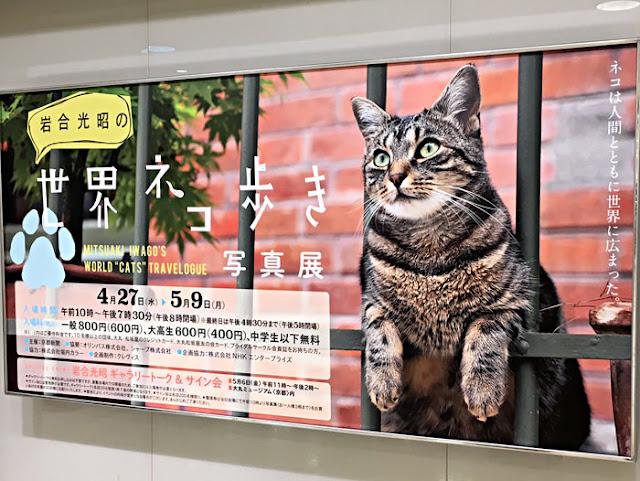 岩合光昭の世界ネコ歩きin京都大丸
