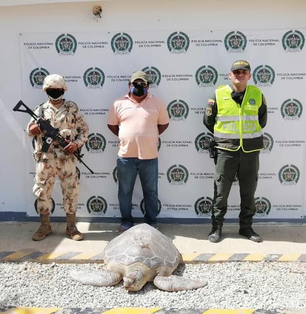 hoyennoticia.com, Un capturado y diez tortugas recuperadas en Uribia
