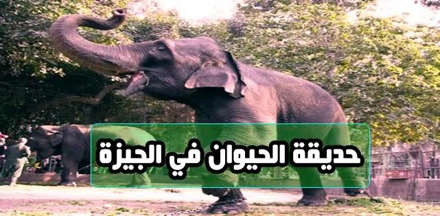 حديقة الحيوان في الجيزة