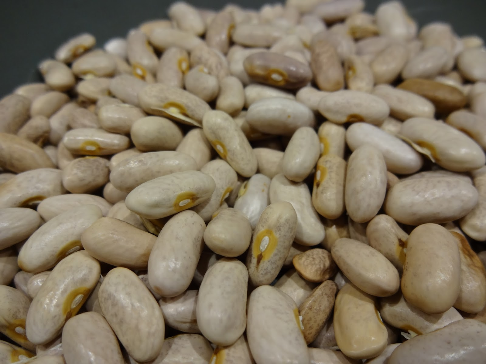 The Scientific Gardener: Royal Burgundy Bush Beans