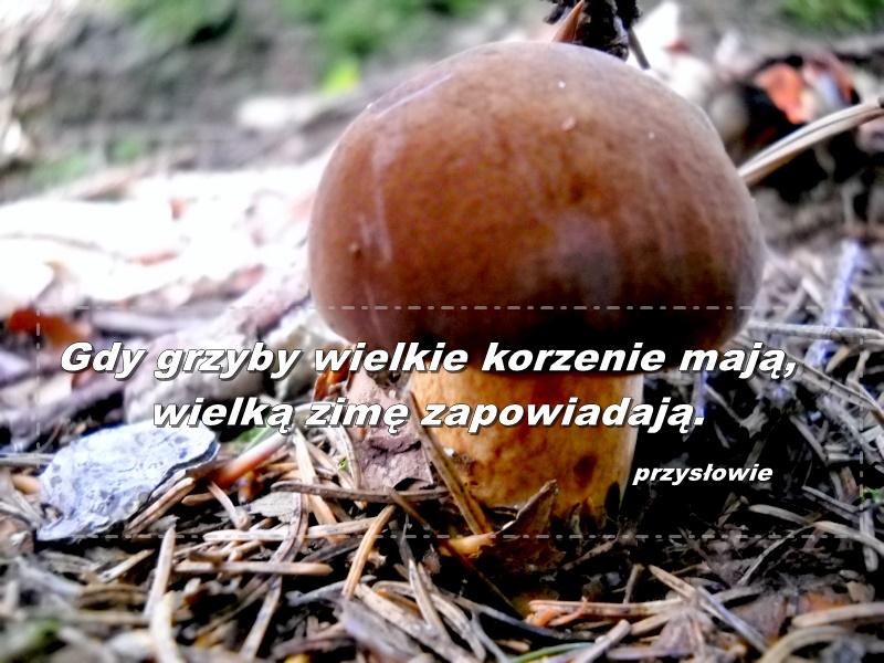 zatrucie-grzybami