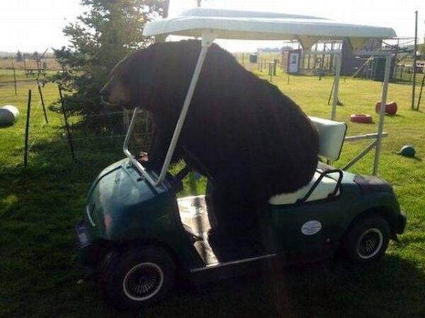os animais ajudam a nos tirar do tédio