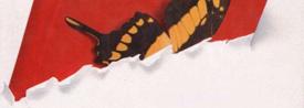 Libro En las alas de las mariposas - Cine de Escritor