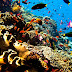 Top list priority areas of nautical and adventure tourism in Indonesia