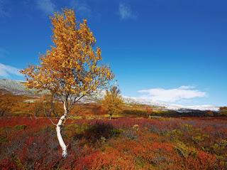 Autumn, Rondane