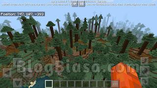 Podzol + giant tree taiga, tall spruce tree