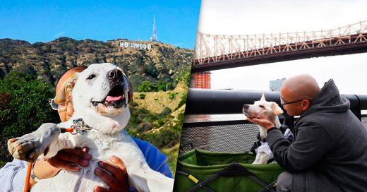Dueño de un perro moribundo lo lleva a conocer el país