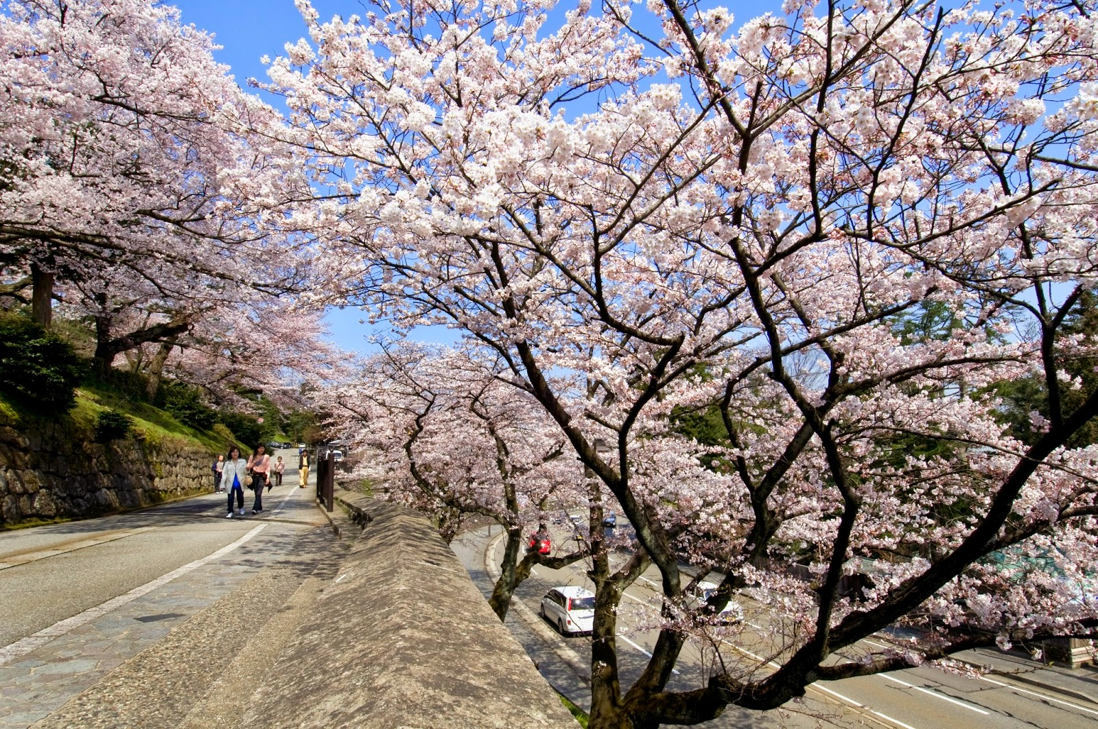 Unique Japan Tours Cherry Blossoms Kenrokuen Garden