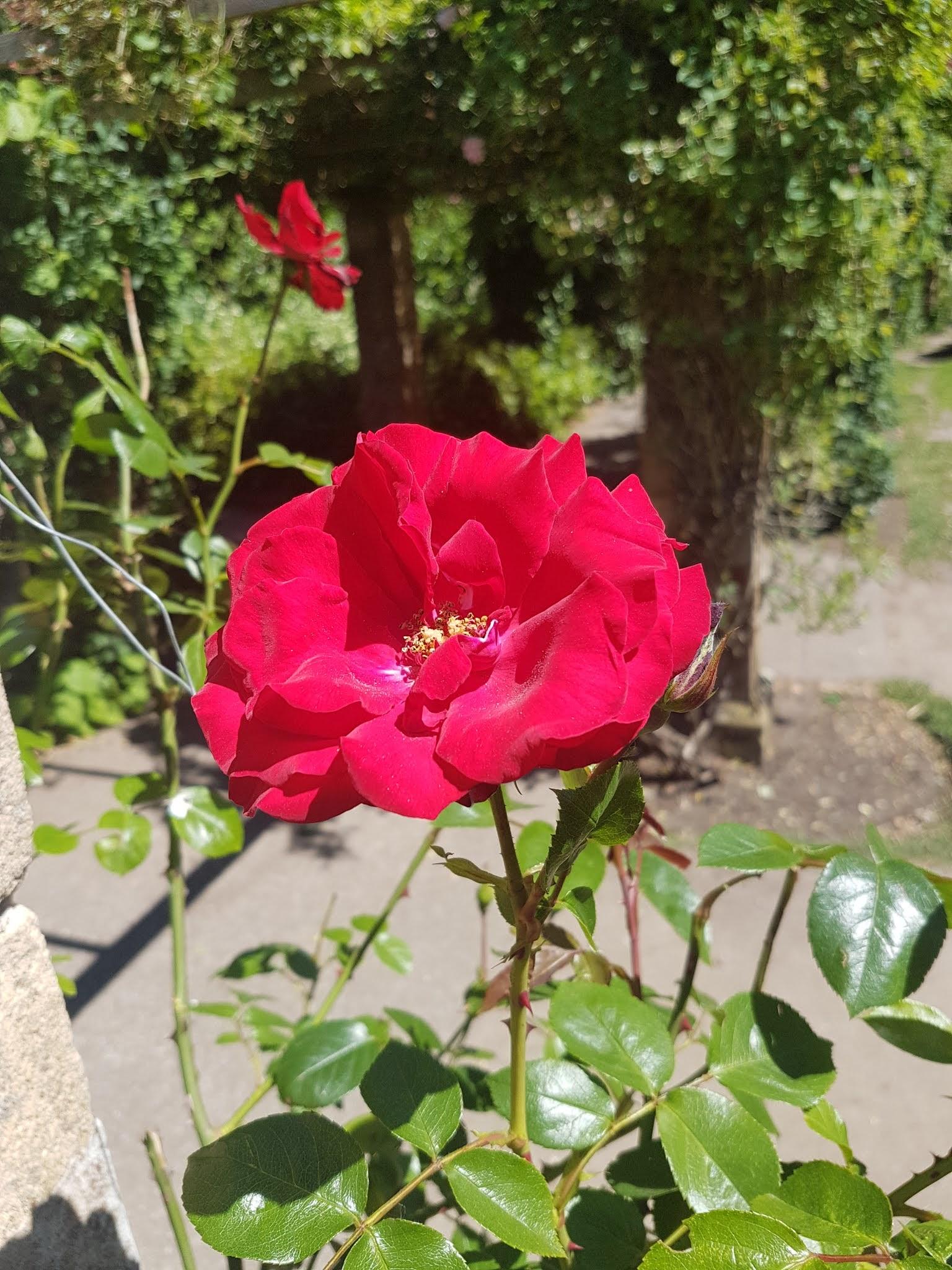 Pink flower in a mindful garden