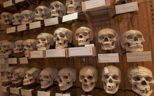 Museum Tengkorak Prancis