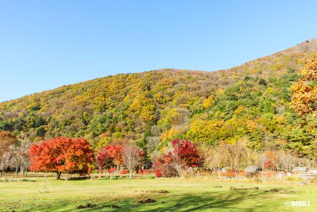 山を彩る紅葉~西湖野鳥の森公園