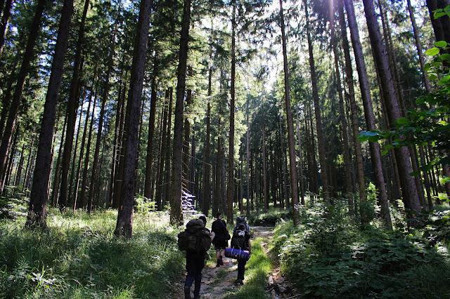 Rando dans les bois