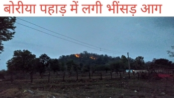 fire in forest of boria, mainpur forest vibhag,mainpur forest services,forest fire in India 2020,