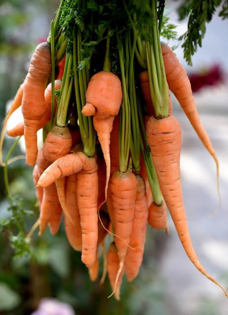 summer carrots