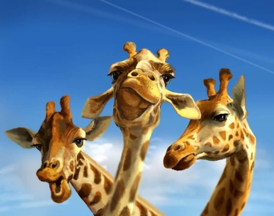 03-Giraffes-are-no-fools-Jeremy-Norton-www-designstack-co