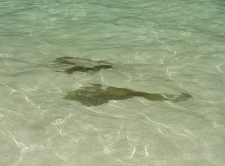 Photograph of rocks submerged in water at Bamboo island, by Manju Panchal
