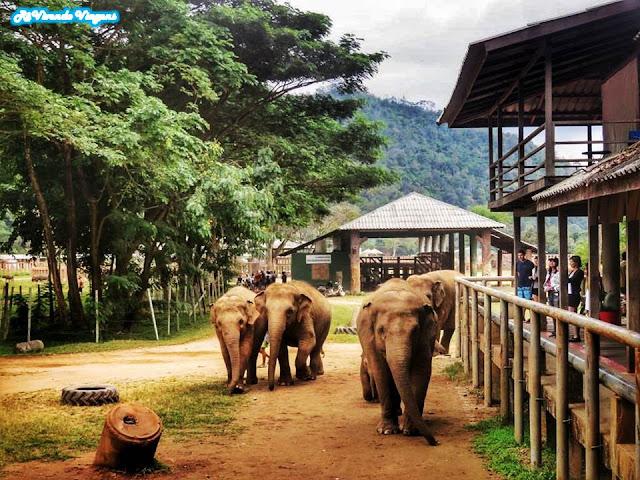 Elephant Nature Park Tailândia
