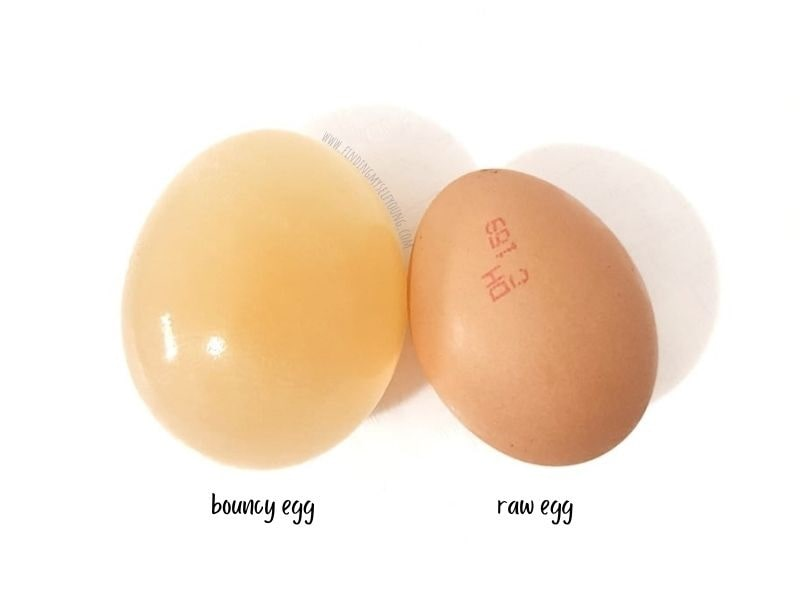 raw egg and bouncy egg size difference