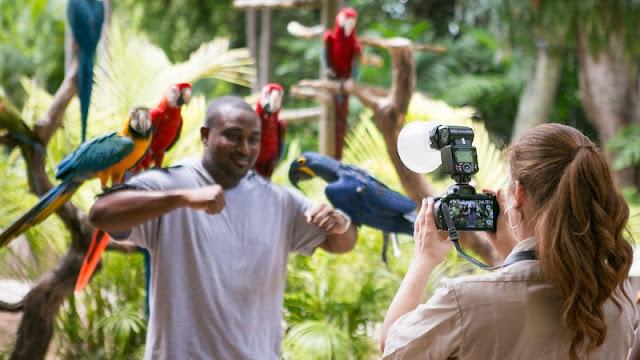 Visite Jungle Island em Miami
